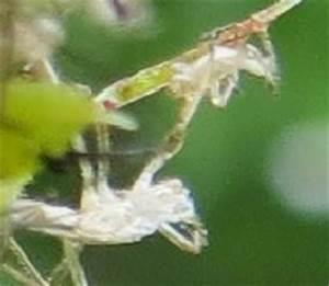 Spinnmilben Natürlich Bekämpfen : spinnmilben bek mpfen ~ Buech-reservation.com Haus und Dekorationen