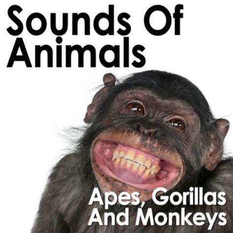 amazoncom ambient jungle sounds  vervet monkey