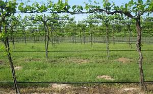 Hc Trellis Design 6ft Spacing