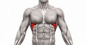 Getting To Know Your Serratus Anterior  Strengthen Your