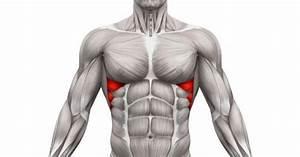 Serratus Anterior Muscle  Functional Anatomy Guide