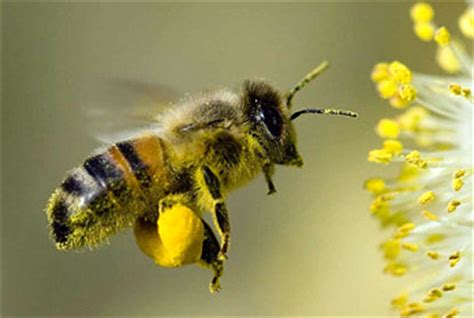 national honey bee day aug