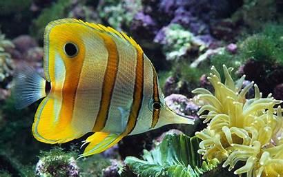 Fishes Wallpapers Desktop Fish Pretty Tropical Ocean