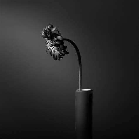 Still White Black And White Still Life Photography Bwvision Black