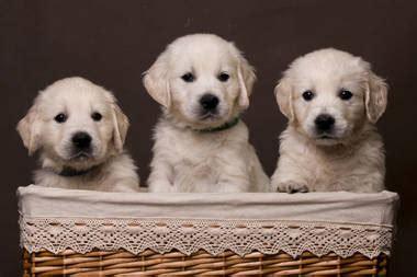 hunde verkauf hunde kostenlos hunde zu verschenken