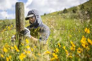 When Fencing Becomes An Obstacle Or Hazard For Migrating