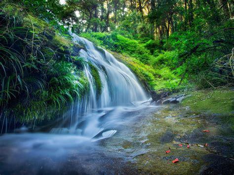 green jungle river stream  hd wallpaper preview wallpapercom