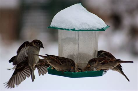 don t forget to feed birds in winter new house new home