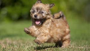 Top 15 Cutest Small Dog Breeds | FallinPets