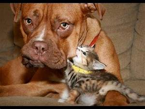 FUNNY VIDEOS: Funny Cats - Funny Dogs - Dogs Love Kittens ...