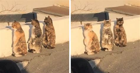 Cat Standing On Two Feet by Cats Get Caught Pretending To Be Humans React