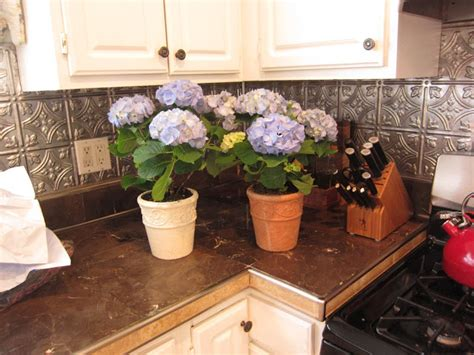 feeding hydrangeas in pots feeding hydrangeas in pots 28 images nancy medina morning garden azure blue hydrangeas by