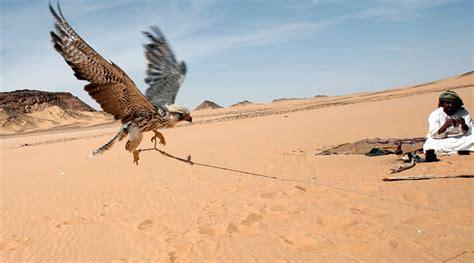 qatar royals   abducted  iraqi desert report