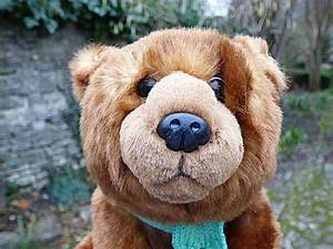 Teddy Bear Hund : chez maximka we 39 re going on a bear hunt dvd review ~ A.2002-acura-tl-radio.info Haus und Dekorationen