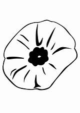 Poppy Coloring Pages Remembrance Flower Close Printable Popular Coloringhome sketch template