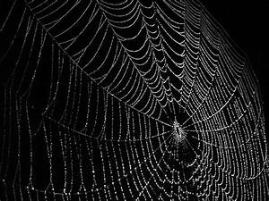 SPIDER WEB PICTURES, PICS, IMAGES AND PHOTOS FOR YOUR ...