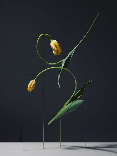 flower postures  carl kleiner everythingwithatwist
