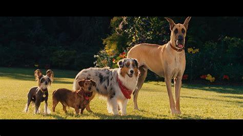 marmaduke pictures image gallery marmaduke dog
