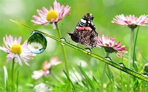 Schmetterling Insekten Natur Tropfen Wasser Blumen See