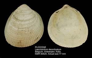 Home/NATURAL HISTORY MUSEUM ROTTERDAM - Mollusca