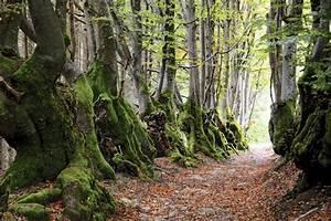 Foret à Bois : l arbre sort du bois ~ Nature-et-papiers.com Idées de Décoration