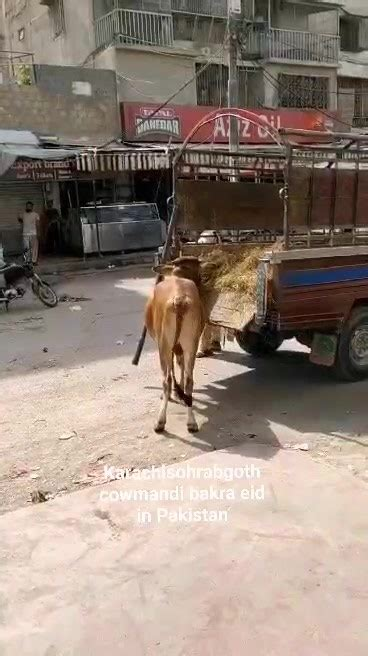 Karachi Sohrab Goth Cow Mandi-Bakra Eid In Pakistan ...