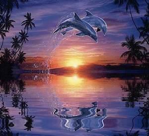 Schöne Delfin Bilder : animiert pinterest delphin bilder delphine und tiere ~ Frokenaadalensverden.com Haus und Dekorationen