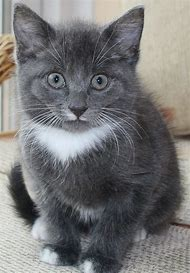 Cute Gray Cats and Kittens