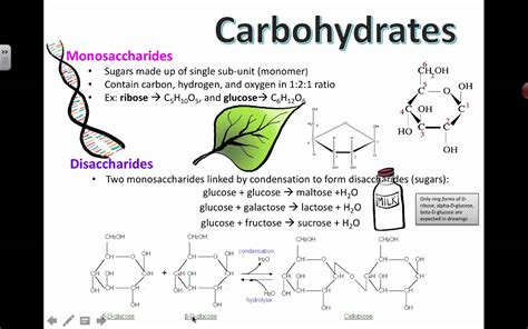 carbohydrate structure  ib biology youtube