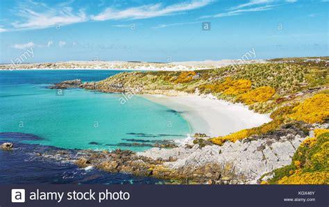 gypsy cove gypsy cove falkland islands stock photos gypsy cove