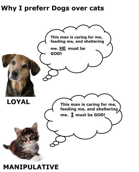 cats funny dogs vs difference between cat why dog hate evil really pic quotes better than today true cute animals