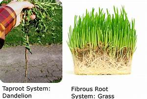 Plant Organs: Roots, Stems, and Leaves   CK-12 Foundation