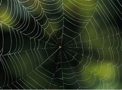 Nature Patterns Spider Webs Geographic National Izismile