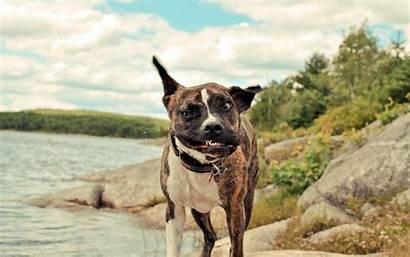 Desktop Funny Backgrounds Dogs 2560 1600 Pixels