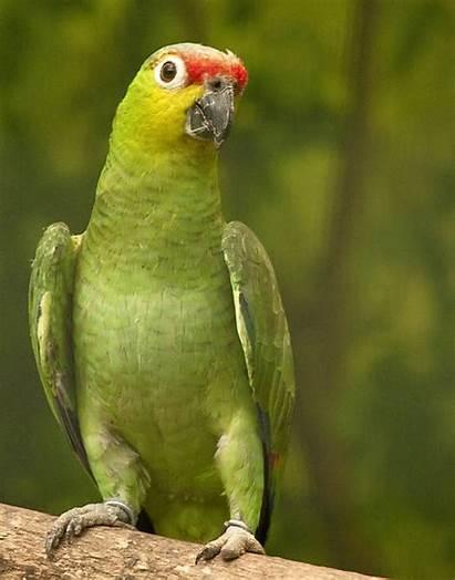 Parrot Cheeked Animals Threat Under Animal 6th