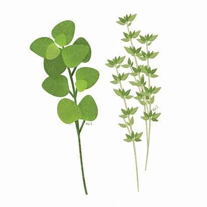 Herbs Vegetal Histologia Lustik Illo Flower Resumo