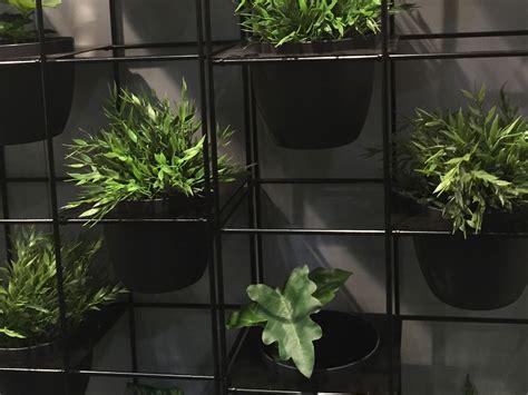 plant walls   wall art eco green office plants