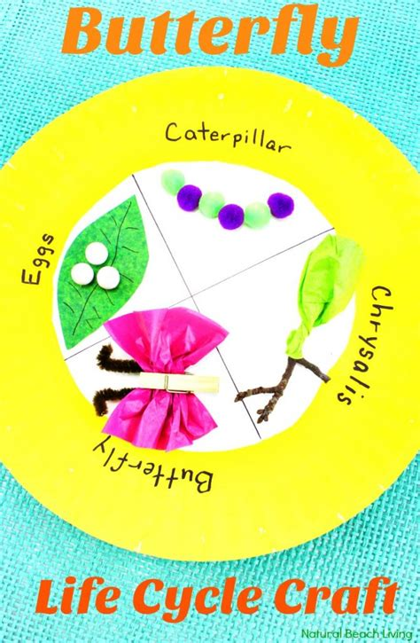 easy butterfly cycle craft paper plate 228 | Butterfly Life Cycle Paper Plate Craft pin 2 669x1024