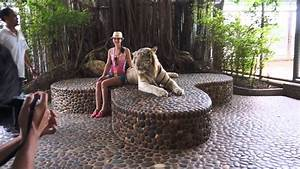 Photo With White Roaring Tiger  The Million Years Stone