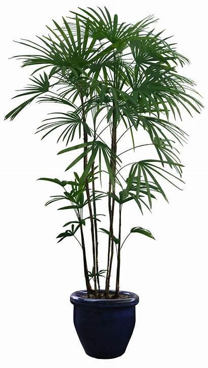 Plants Transparent Plant Pot Tree Trees Potted