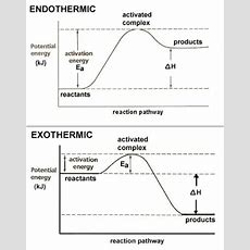 Dr Will Mccarthy's Science Site Endothermic Vs Exothermic Chemical Reactions