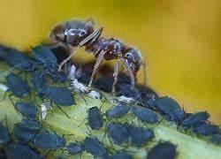 Ameisenplage Im Garten Bekämpfen : ameisen im garten ameisenplage ameisen bek mpfen so gehts ~ Articles-book.com Haus und Dekorationen