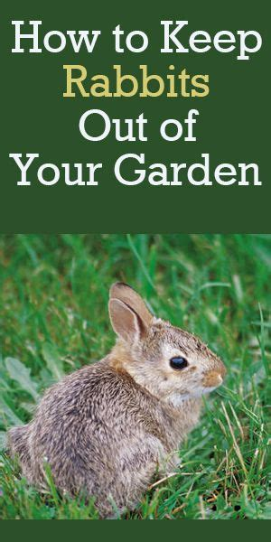 Rabbit Repellent For Gardens - how to keep rabbits out of your garden rabbit resistant