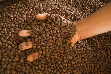 Fairtrade Organic Cost Rican Coffee Beans Online Starbucks Iced Coffee Refill Grounds Good For Grass Ground Diarrhea Keep Cats Out Garden Divination Can You Order Unsweetened Variations To Go