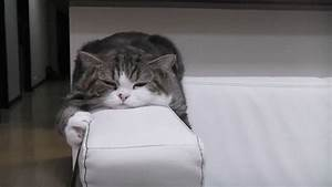 Sleepy Cat GIF - Find & Share on GIPHY