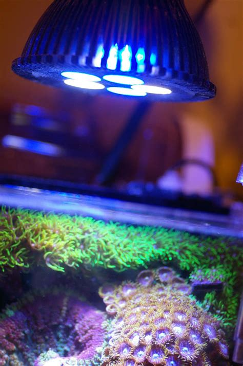 pico reef led lighting andrew kwon s dymax iq3 pico reef club acuarios marinos