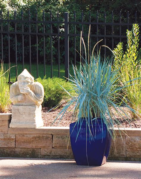 ornamental grasses  growing  containers