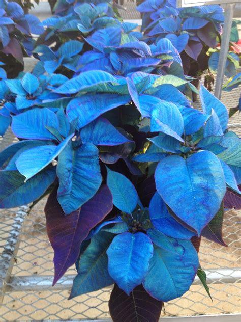 Blue Leaf Plants  Wwwpixsharkcom  Images Galleries
