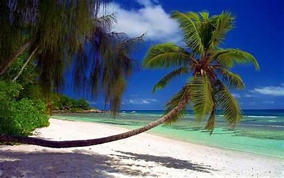 Palm Trees Tropical Island Landscape Seychelles Sand