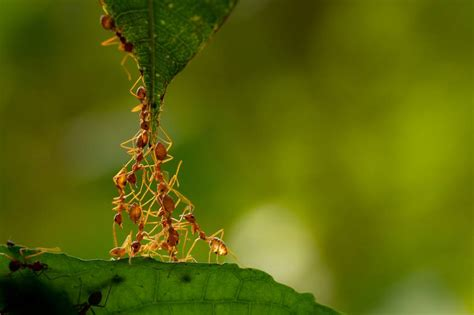 ant colonies remember  individual ants forget